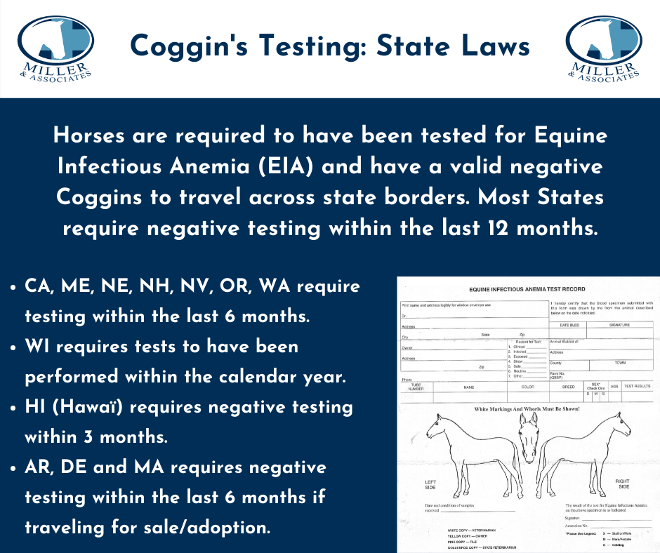 Coggins Infographic for Website